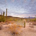Organ Pipe National Monument, Sunrise -133