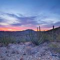 Organ Pipe National Monument, Sunset -151
