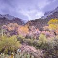 Sabino Canyon -20