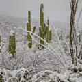 Saguaro National Park, Snow Storm -2