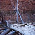 Zion National Park, Trees-1